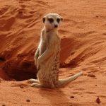 Tourisme culturel en Afrique, le cas de la Namibie